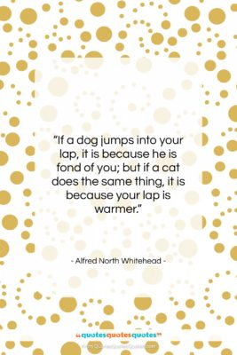 """Alfred North Whitehead quote: """"If a dog jumps into your lap,…""""- at QuotesQuotesQuotes.com"""