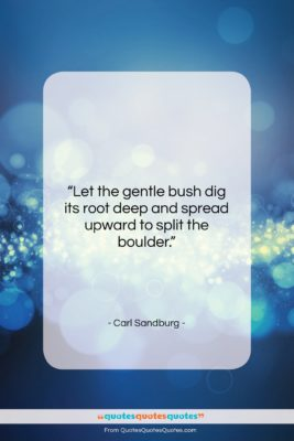 """Carl Sandburg quote: """"Let the gentle bush dig its root…""""- at QuotesQuotesQuotes.com"""