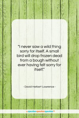 """David Herbert Lawrence quote: """"I never saw a wild thing sorry…""""- at QuotesQuotesQuotes.com"""