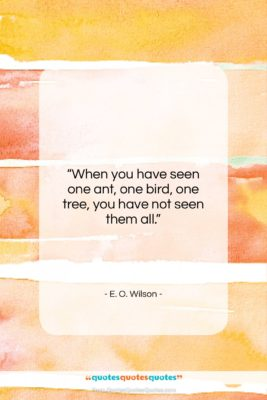 """E. O. Wilson quote: """"When you have seen one ant, one…""""- at QuotesQuotesQuotes.com"""