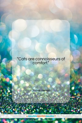 """James Herriot quote: """"Cats are connoisseurs of comfort….""""- at QuotesQuotesQuotes.com"""