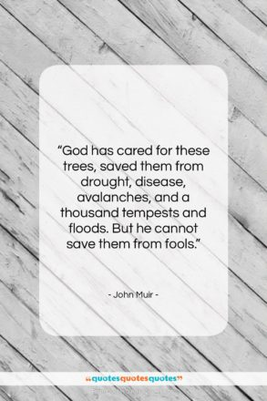 """John Muir quote: """"God has cared for these trees, saved…""""- at QuotesQuotesQuotes.com"""