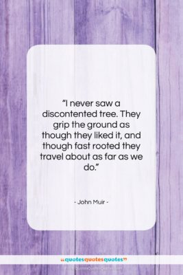 """John Muir quote: """"I never saw a discontented tree. They…""""- at QuotesQuotesQuotes.com"""