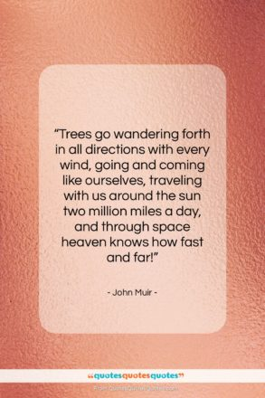"""John Muir quote: """"Trees go wandering forth in all directions…""""- at QuotesQuotesQuotes.com"""