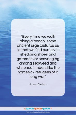 """Loren Eiseley quote: """"Every time we walk along a beach,…""""- at QuotesQuotesQuotes.com"""
