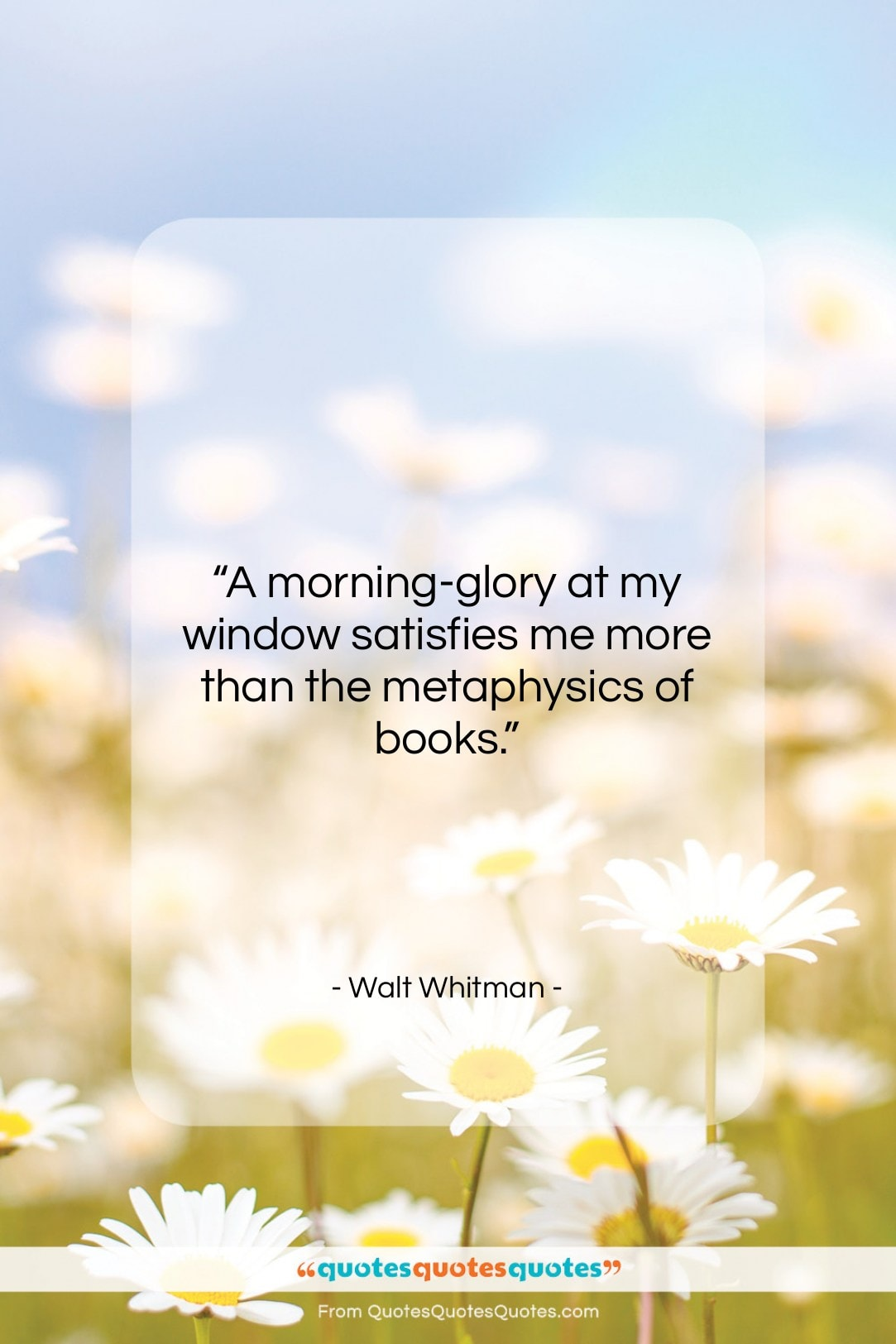 """Walt Whitman quote: """"A morning-glory at my window satisfies me…""""- at QuotesQuotesQuotes.com"""