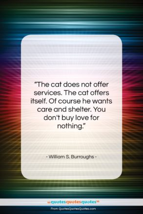 """William S. Burroughs quote: """"The cat does not offer services. The…""""- at QuotesQuotesQuotes.com"""